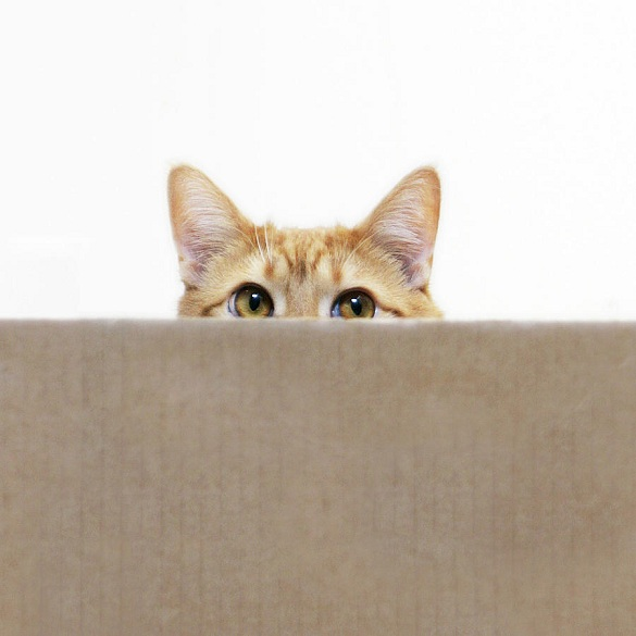 orange-cat-peeping-out-from-cardboard-box-kevin-steele